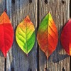 秋分の日で太陽の天秤座入り。発展的で、希望に満ちた雰囲気【今日の星回りを仕事に活かす方法】