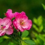 優しさ…慈悲の心や許しの気持ちを持ってみる