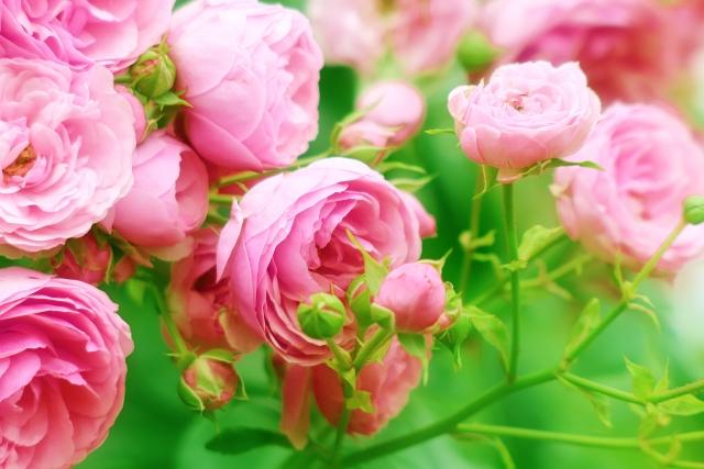人生がバラ色になる方法~自分を愛するなんて難しいと思ってしまうあなたへ