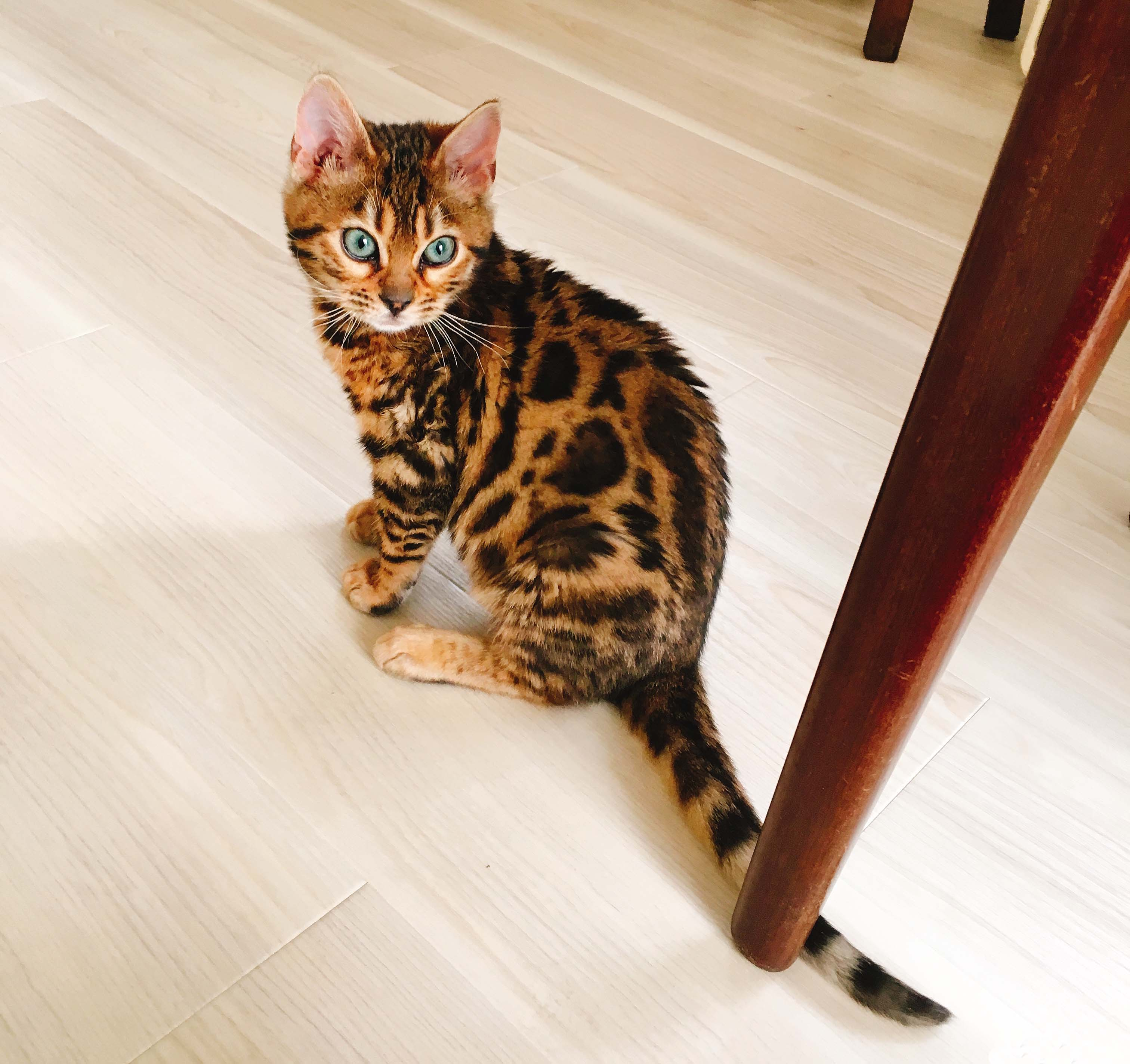 子猫のうーちゃん