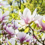 地球が与えてくれる「五感で感じる豊かさ」を堪能したい祝福のとき【5月の12星座の運勢】