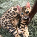 猫のうーちゃんとフラワーエッセンス(1)