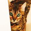 猫のうーちゃんとフラワーエッセンス(2)