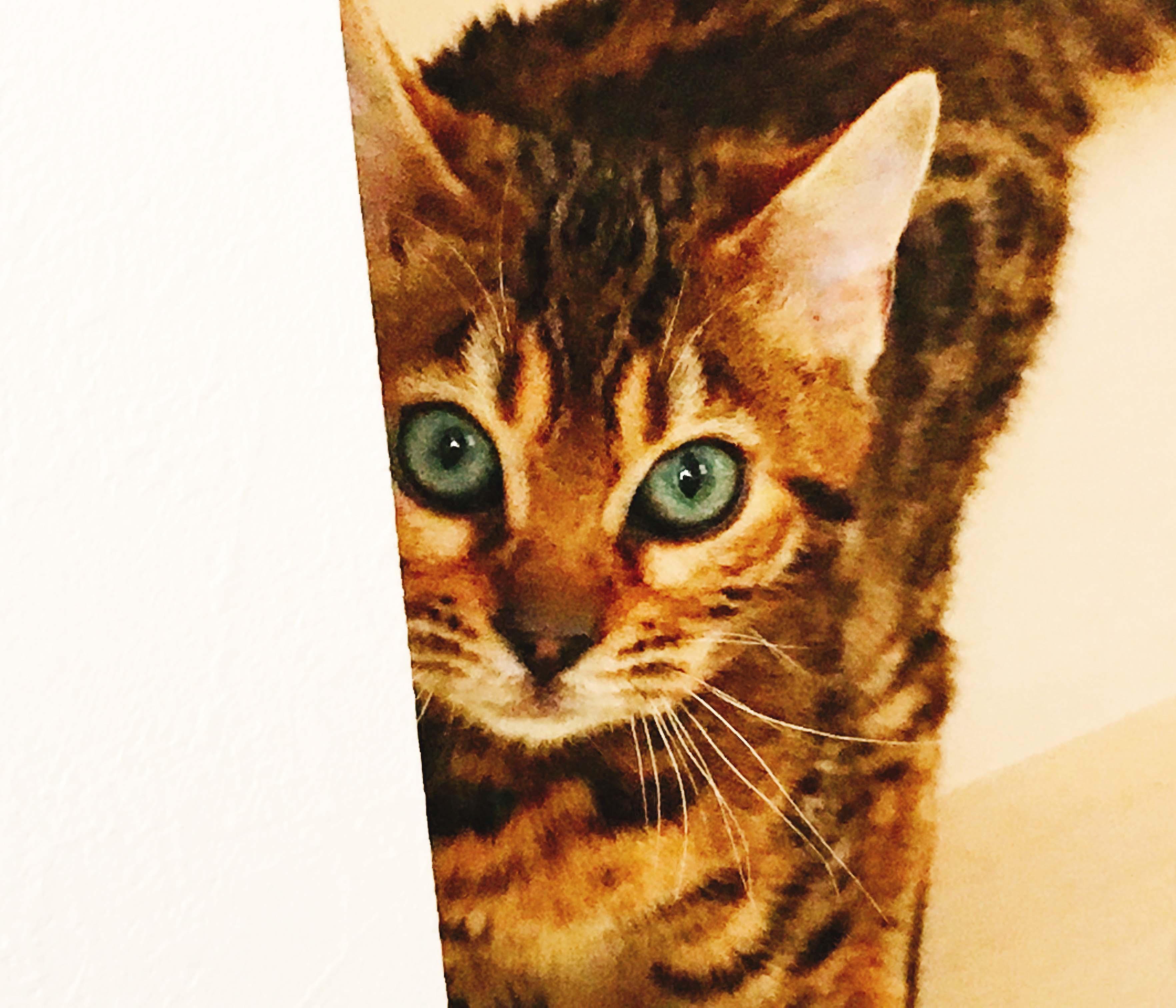 猫とフラワーエッセンス
