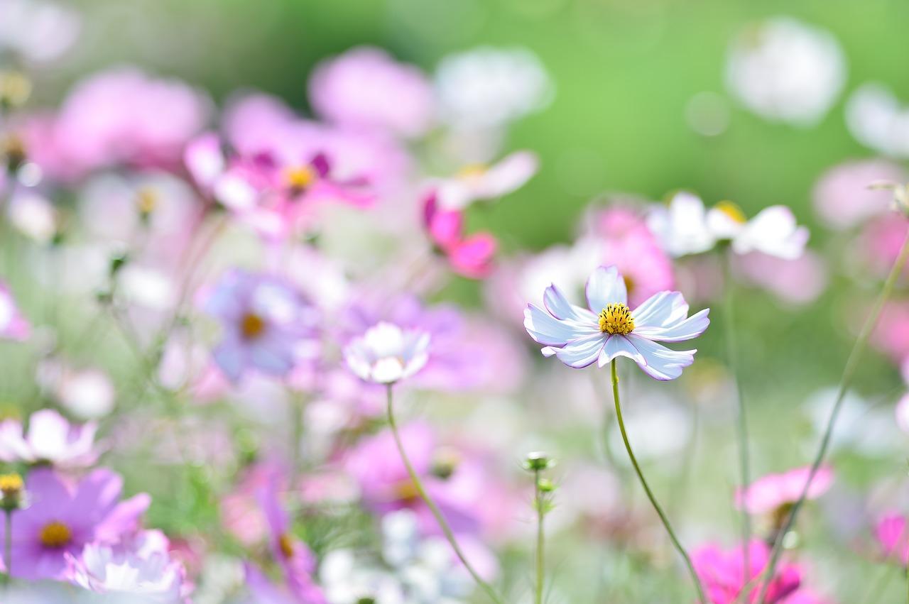 心の中の庭づくり〜潜在意識を整えて望む現実をつくるには?