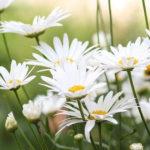 あなたが開花するとき~自分の人生のプロセスを信頼するということ