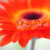 うまくいかないことは魂からのメッセージ〜服用するだけで自然に生きづらさが解消する癒しの雫