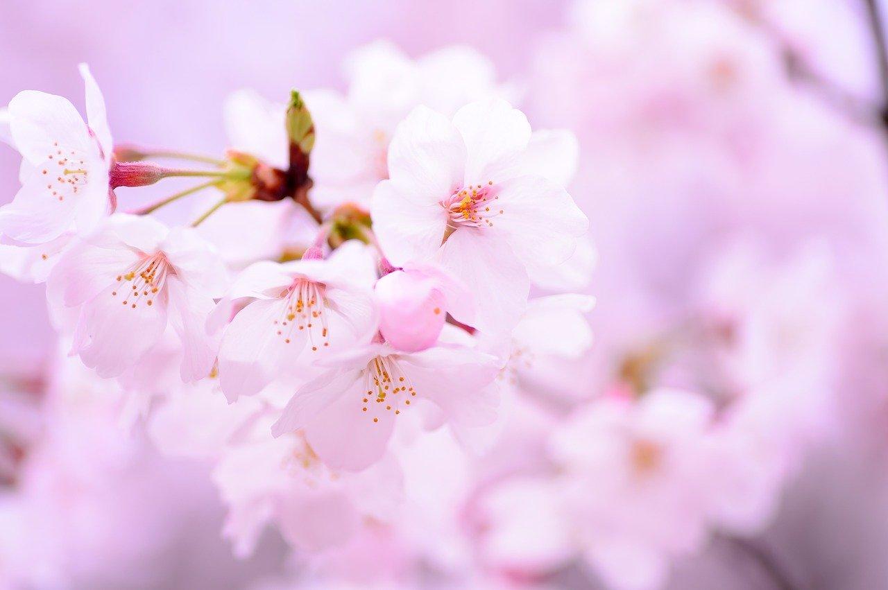 3月20日は春分の日〜来るべき新しい時代にあった自分にバージョンアップ!