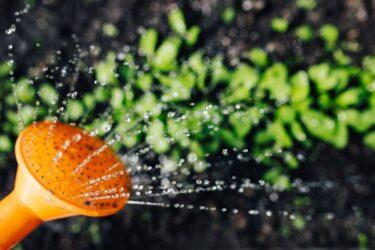 植物を育てるように、運を育てるということ
