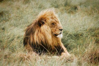 獅子座は嫌われる勇気を持つのが難しい